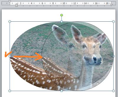 Как в Word обрезать изображение по кругу и другим контурам